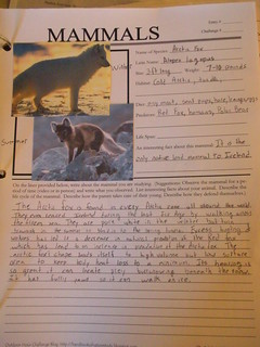 arctic fox notebook page
