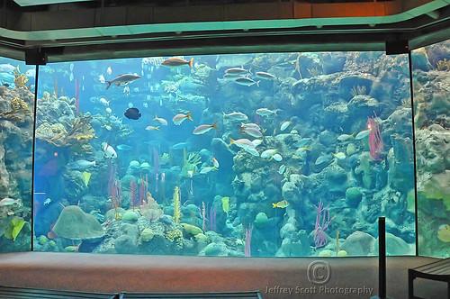 Flickriver photoset 39 fish 39 by thejeffreywscott for Big fish tank