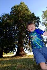 sequoia tree & sequoia kid    MG 9000