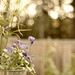 Flower Pot Bokeh