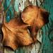 Crisp Fall  by joe burden