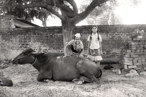boy blackandwhite india girl kids rural children buffalo cattle farm sikh 1855 punjab d60