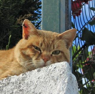 Un gato que pasa de mi