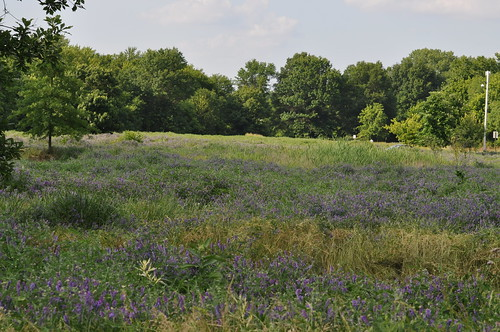 landscapes spring wildflowers heinz nwr