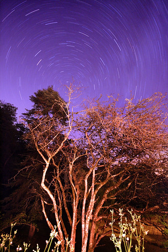 Star Trails | by - Alex Witt -
