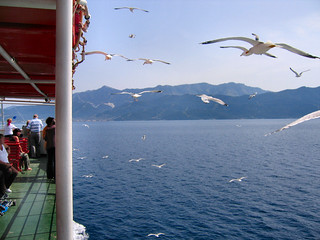 DIVE-BOMBERS OF THE THASSOS FERRY.