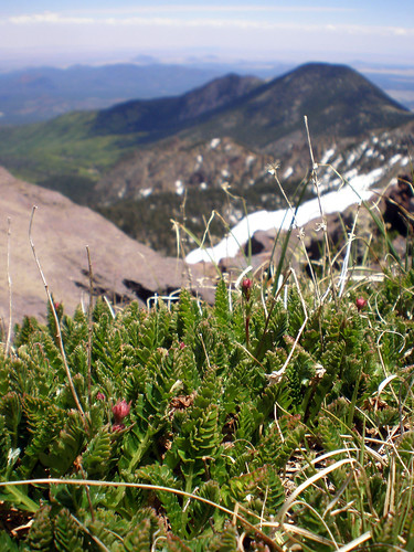 Alpine tundra atop Humphreys Peak by Coconino National Forest