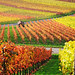 Autumn Vineyard by Habub3