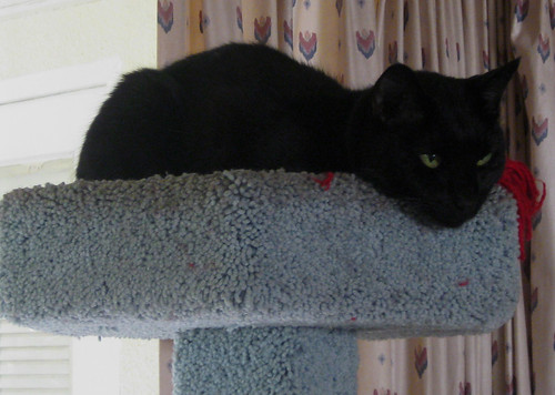 catloaf in the cat tree