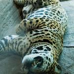 Woodland Park Zoo Seattle 003