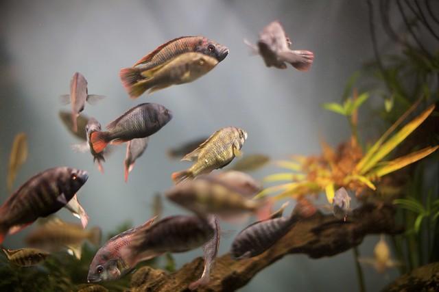 Aquarium captures
