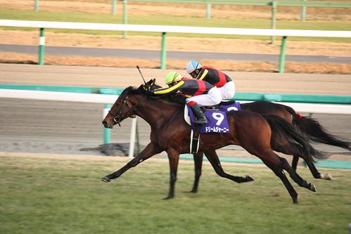 20091227 有馬記念 / Arima Kinen