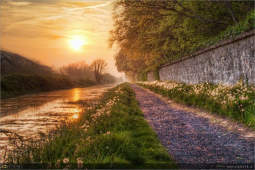 ireland sunset evening canal path seed seeds maynooth hdr pathway towpath dandelions topaz kildare taraxacum royalcanal photomatix tonemapped tthdr taraxacumofficinaleagg topazadjust