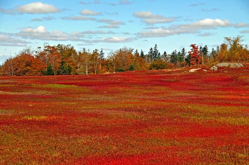 autumn trees red wild canada nature clouds nikon rocks novascotia free blueberry fields dennis parrsboro d300 iamcanadian dennisjarvis archer10 dennisgjarvis