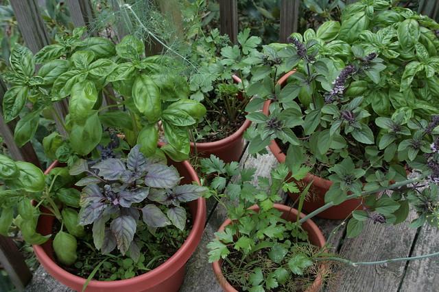 Indoor Outdoor Herb Garden Flickr Photo Sharing
