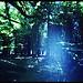 Chez Merlin l'Enchanteur