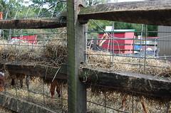 Queens Farm (9)