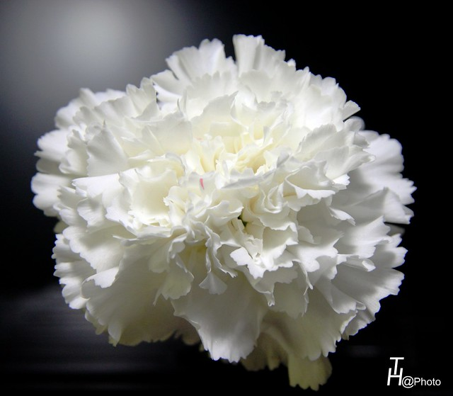EXPOFLORES BLANCAS a gallery on Flickr