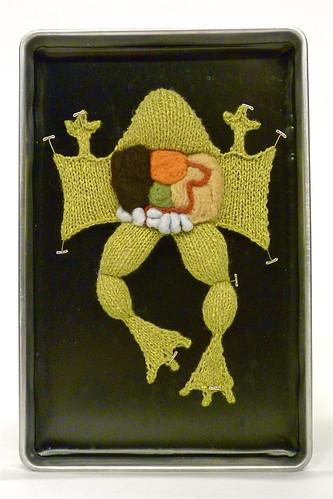Grenouille disséquée en tricot