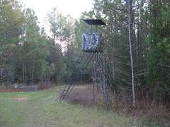 outdoor structure(0.0), hunting(0.0), outdoor recreation(0.0), woodland(1.0), tree stand(1.0),