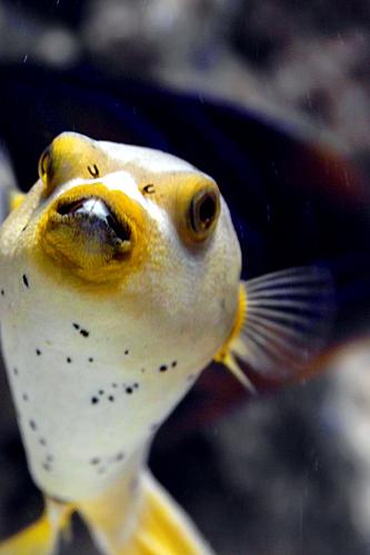 Aquarium hola valencia blog for Aquarium valencia bar