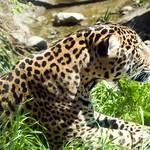 Woodland Park Zoo Seattle 014
