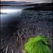 Port Carrick by Culzean Castle by silverlarynx