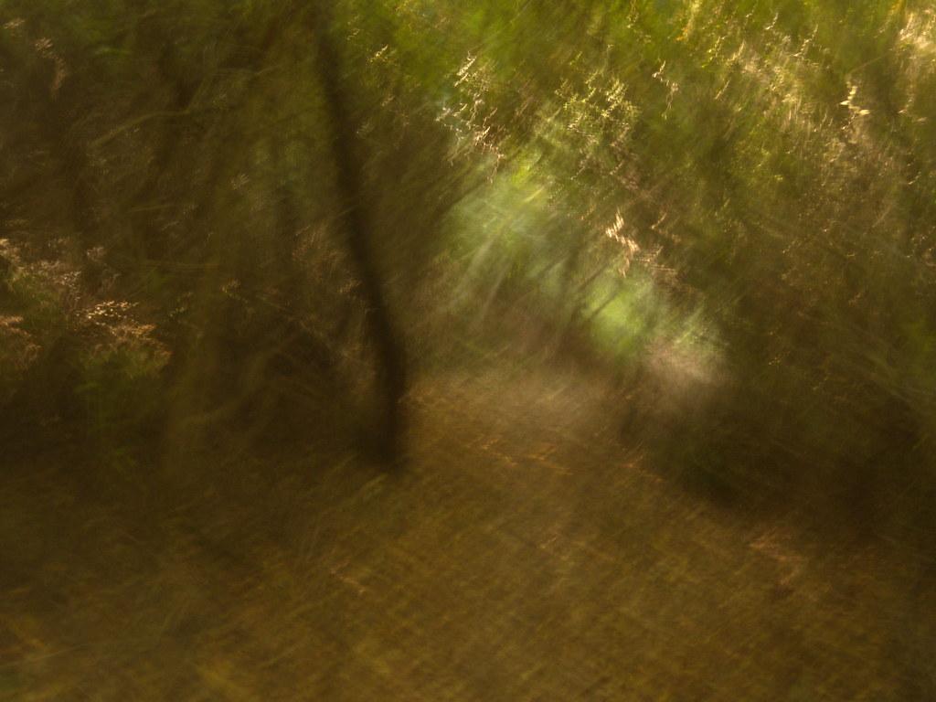 In the woods Edenbridge to Westerham