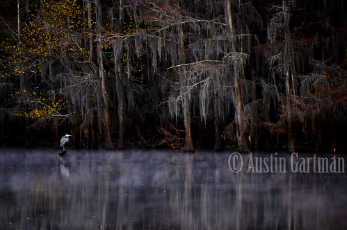 lake cold nature birds animals fog tx jefferson caddo caddolake 34degrees jeffersontx