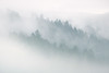 Misty Mount Tamalpais. California, USA