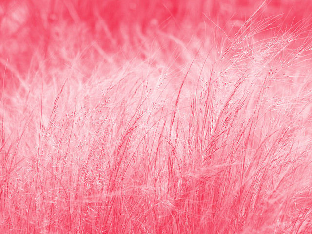 picture of pink - photo #47