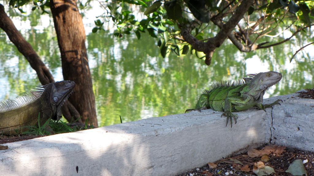 Grounds Keepers - Key Largo, FL