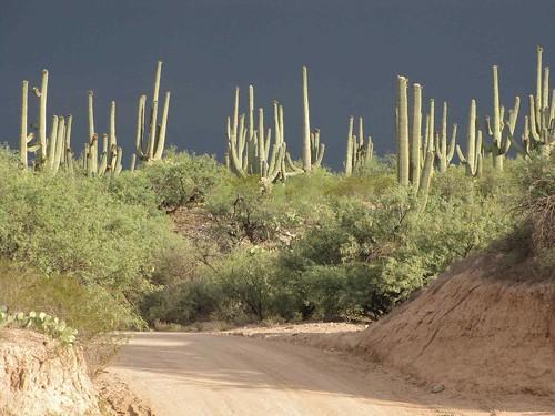 arizona usa cacti landscapes desert unitedstatesofamerica gps 2009