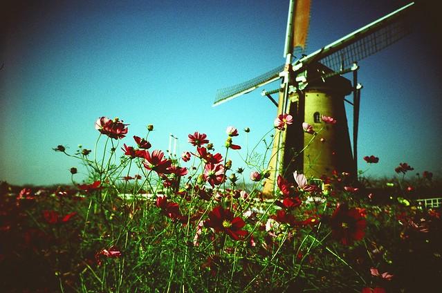 Cosmos & Windmill