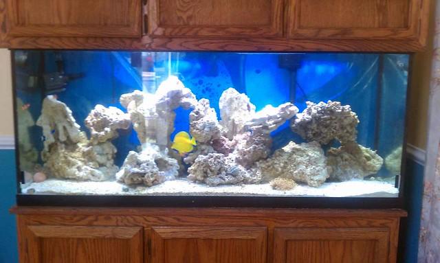 120 gallon Aquarium Flickr - Photo Sharing!