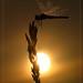 BROKEN SUN by Siprico - Silvano