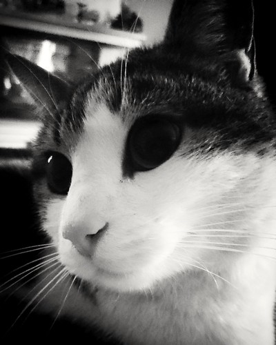 Cat. Blackandwhite.