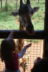okapi(0.0), zoo(1.0), giraffidae(1.0),