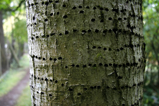 Tree with Holes