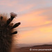 Cactus Sunset - Salar Tour, Bolivia