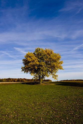 autumn sky tree lehner'spumpkinfarm