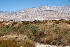 Coachella Valley Reserve