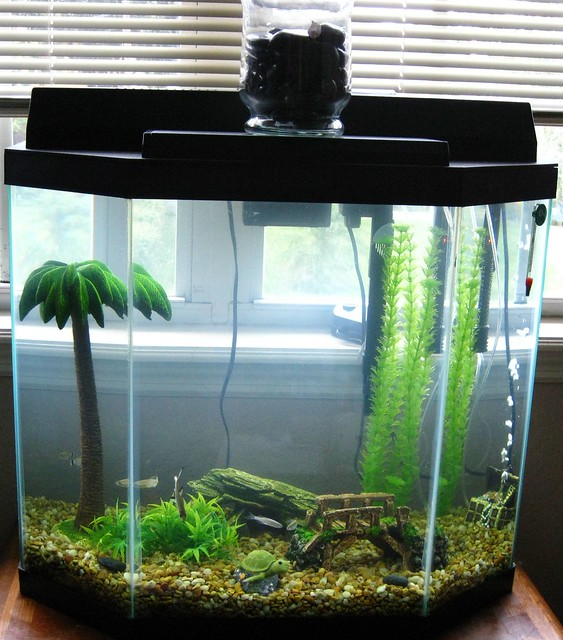23 Gal Tank With Fish 7 16 09 4 Flickr Photo Sharing