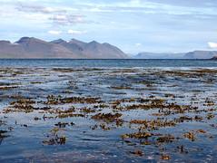 Hafið/The sea