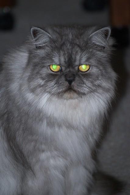 black cat eye color