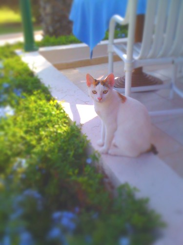 Tunisian Cat taken with iPhone camera