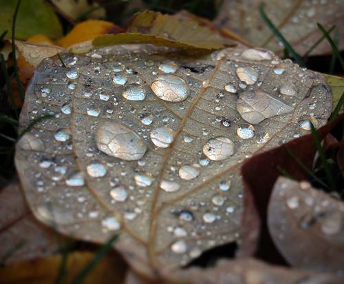 autumn macro fall nikon d70 dew