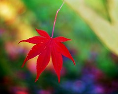 The last leaf, hyped colors