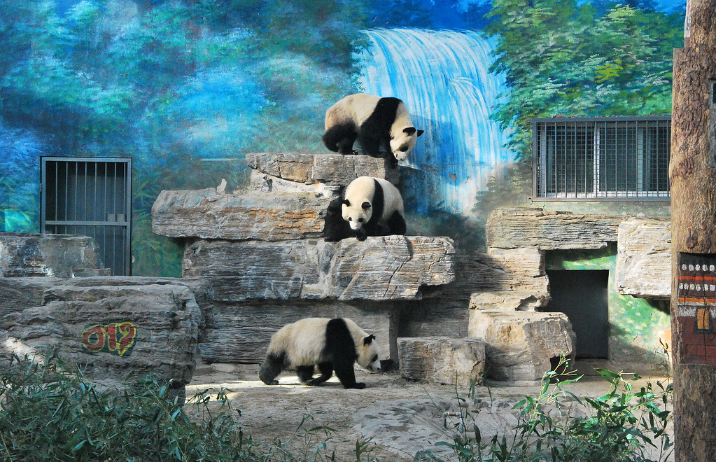 8 largest zoos in the world touropia travel experts. Black Bedroom Furniture Sets. Home Design Ideas