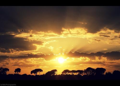 trees sunset sun france bird silhouette clouds sunrise 50mm soleil nikon arbres rays f18 sunrays nuages oiseau gard sud coucherdesoleil camargue southfrance stgilles d90 lerefs